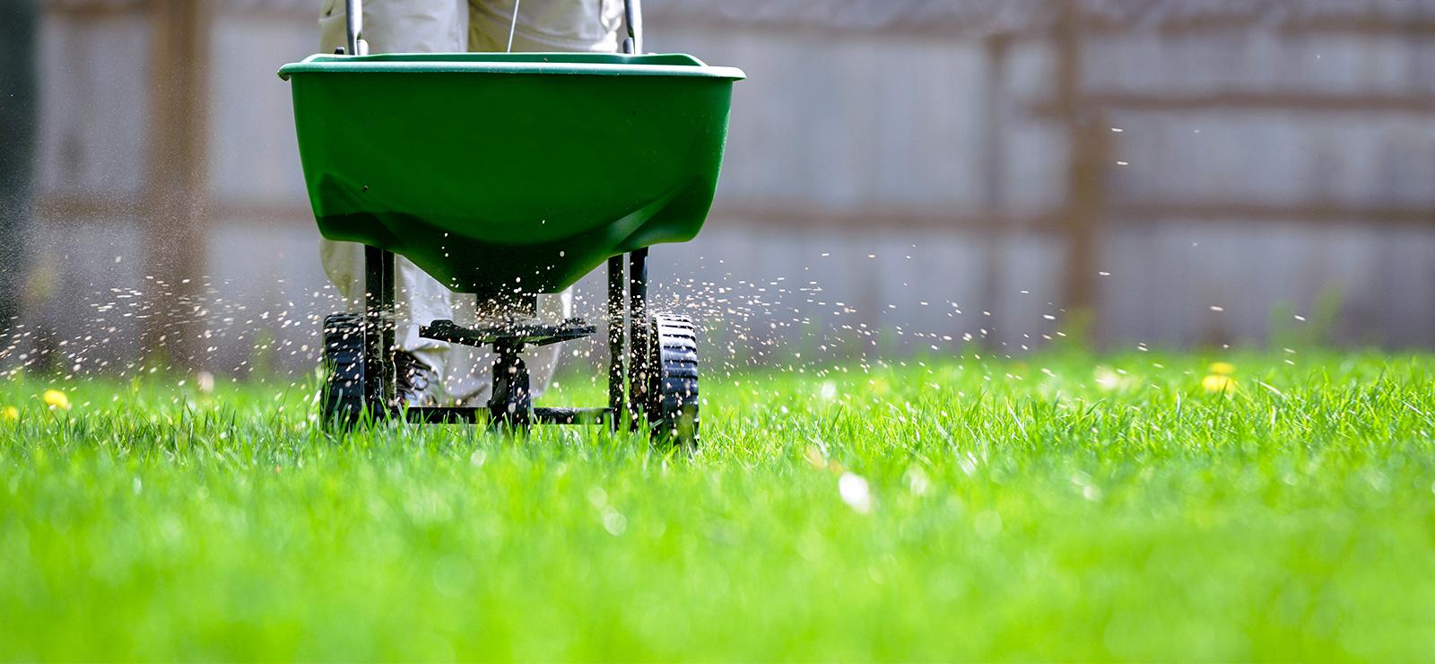 Engrais pour pelouse