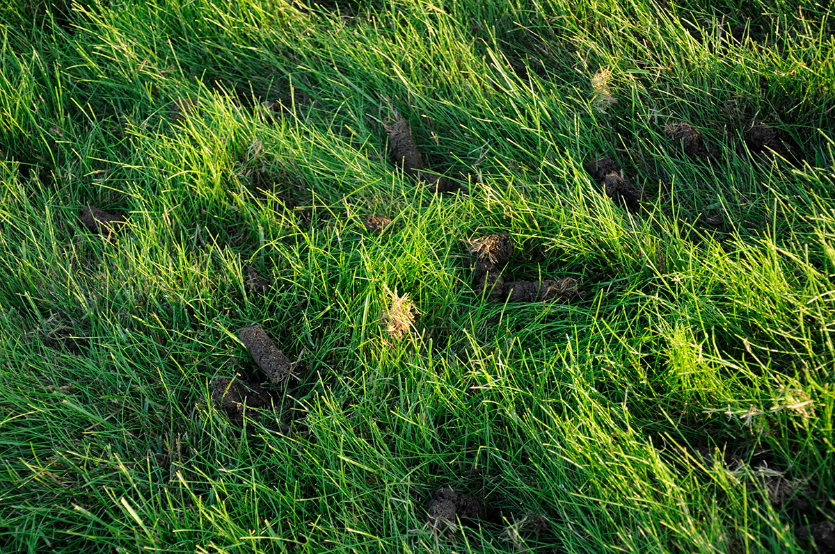 Carotte de l'aération de pelouse, carottage