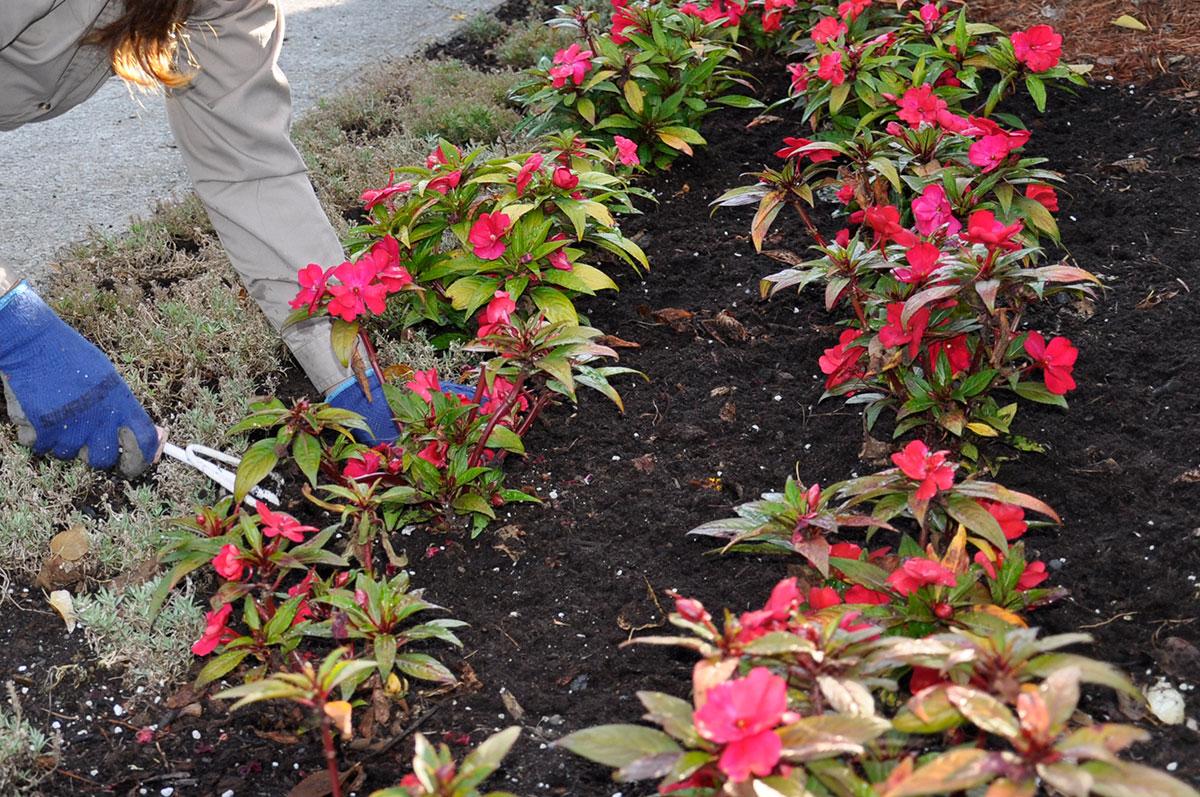 Plate-bande de fleurs annuelles