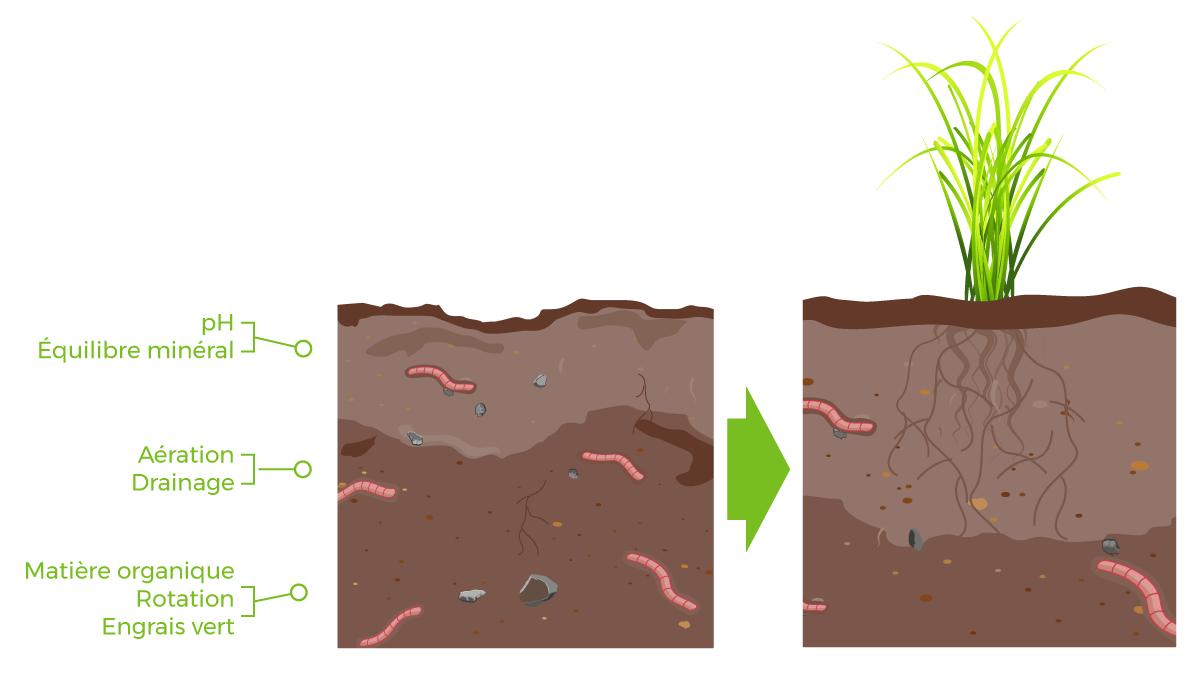 Comment développer la biologie d'un sol