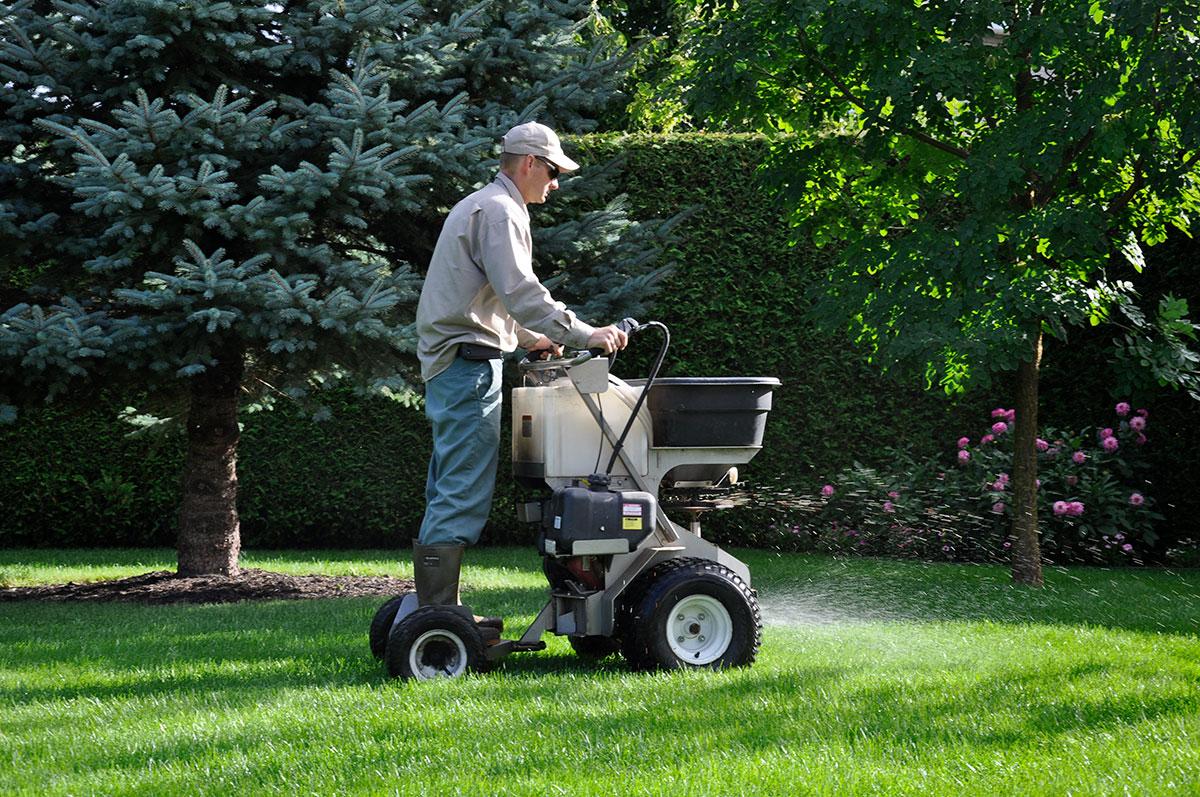 Homme fertilisant une pelouse en été